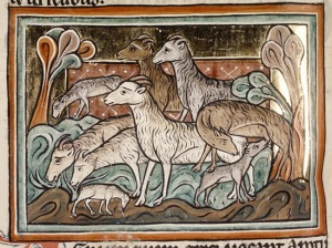 sheep-motif-flock